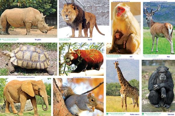 Thuyết trình về bảo vệ động vật Hoang Dã